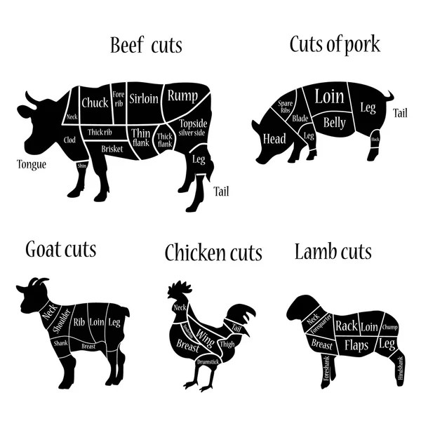 Butcher chart illustration \u2014 Stock Vector © viktorijareut #92453526