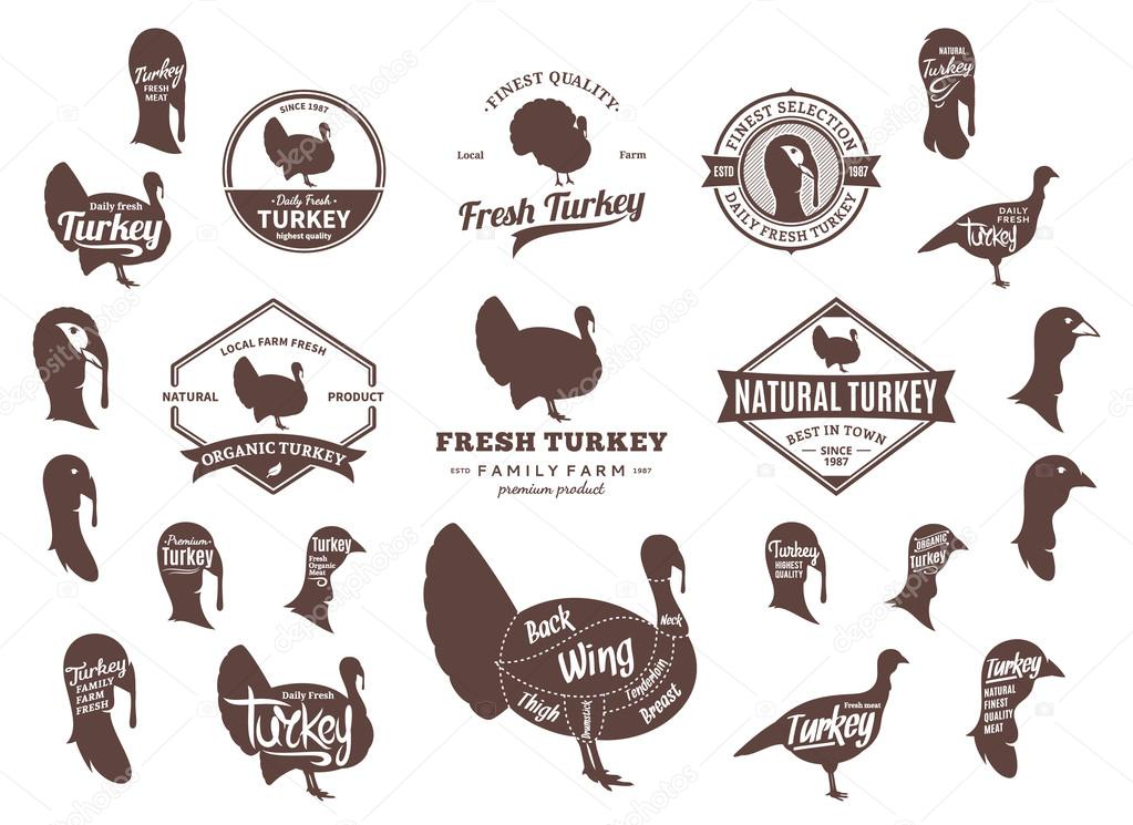 Vector Turkey Logo, Icons, Charts and Design Elements \u2014 Stock Vector