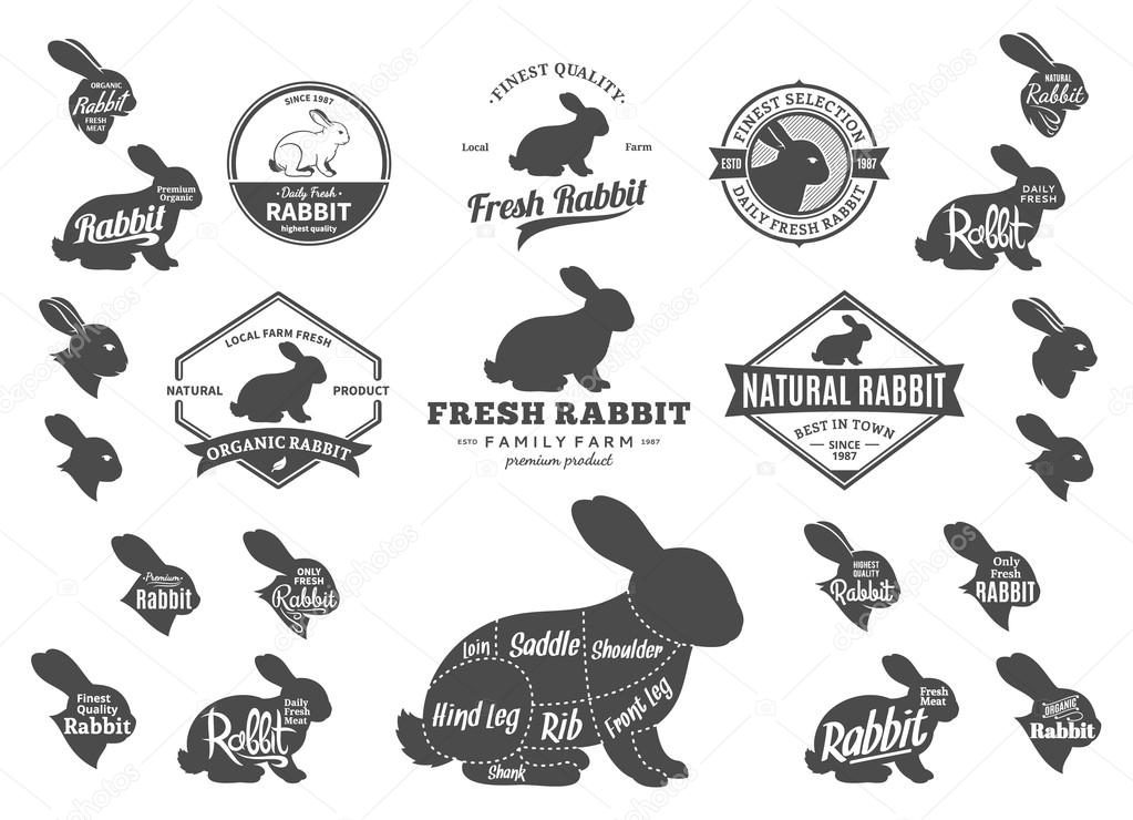 Vector Rabbit Logo, Icons, Charts and Design Elements \u2014 Stock Vector