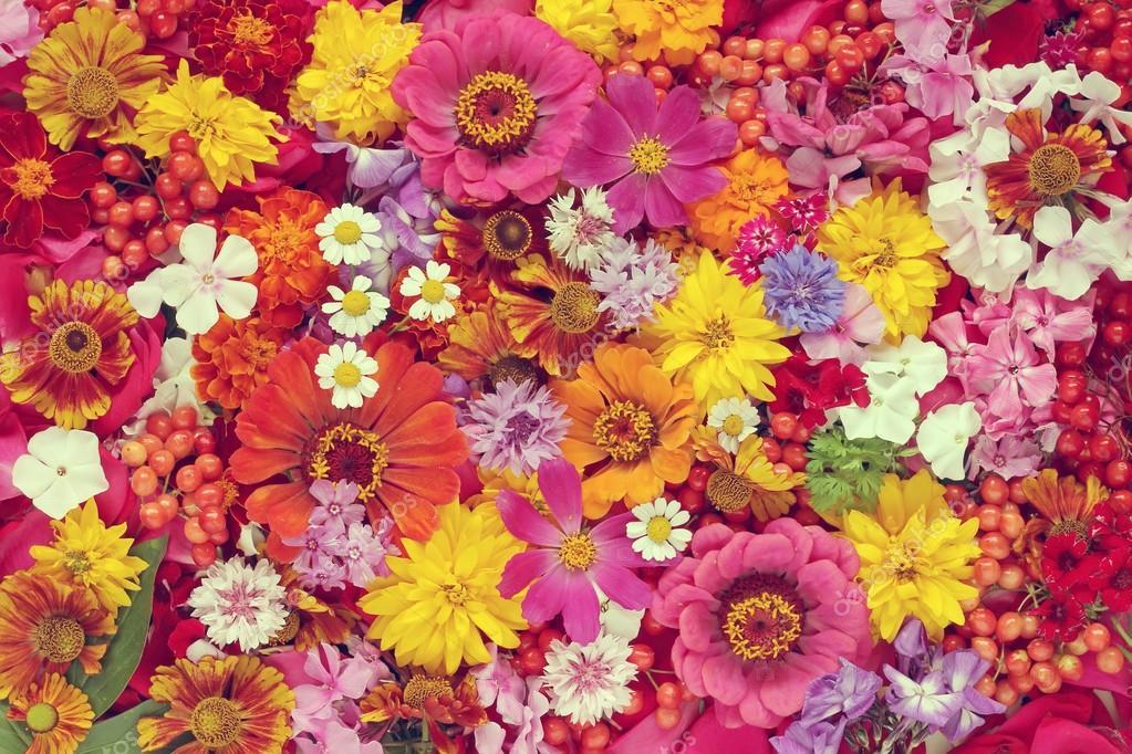 Background Flowers Cvfree Pro