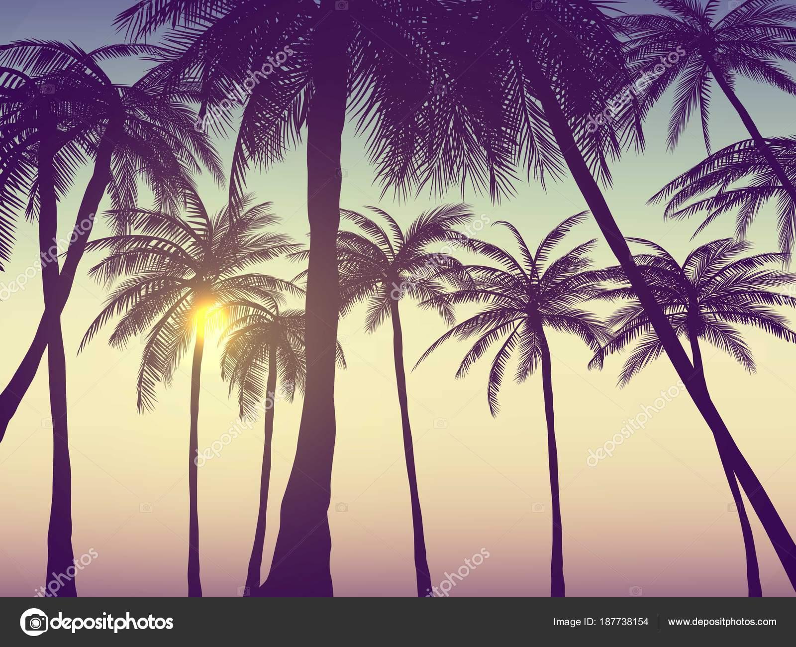 Cute Palm Tree Wallpaper Ambiti Provenienza Estate California Tumblr Impostati Con
