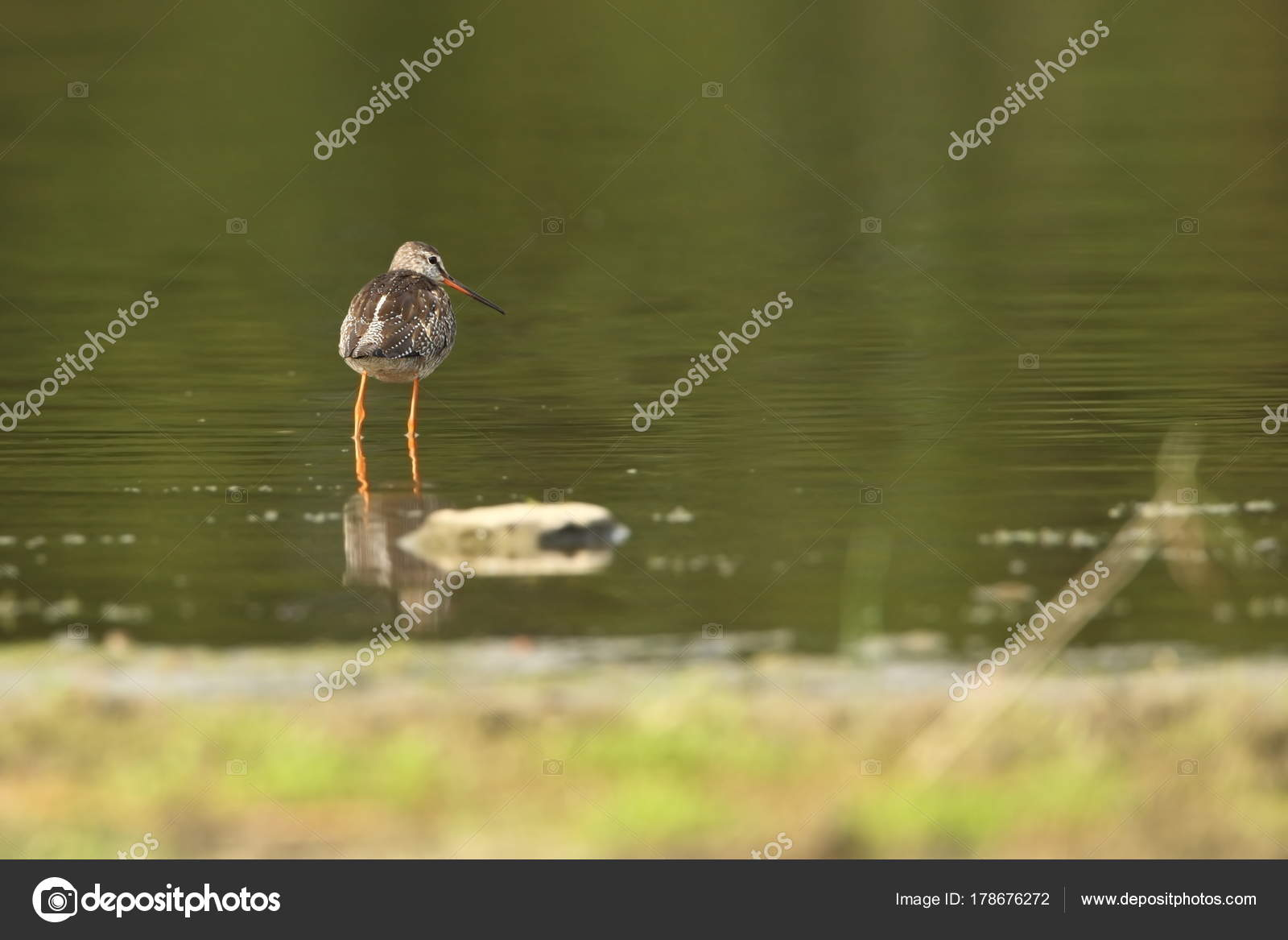 Free Photography Stock Charadrii Wild Nature Czech Free Nature Bird Water Wildlife