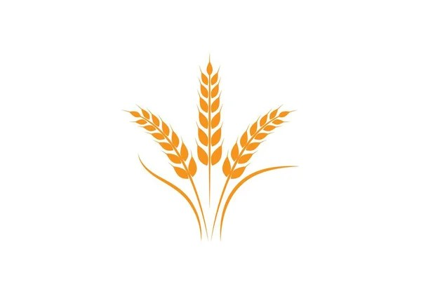 wheat Logo Template \u2014 Stock Vector © elaelo #134560132 - wheat template