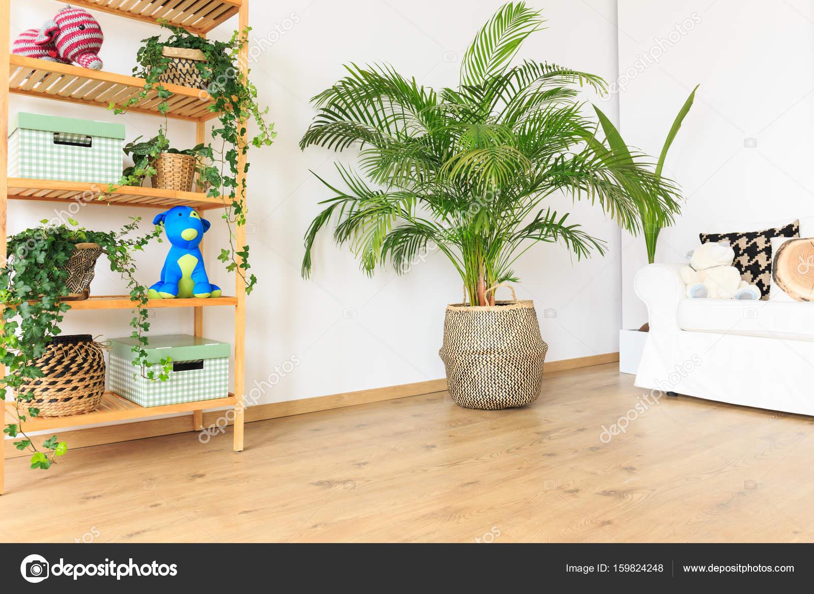 Grote Plant Woonkamer : Grote woonkamer plant wij houden ervan planten in het interieur