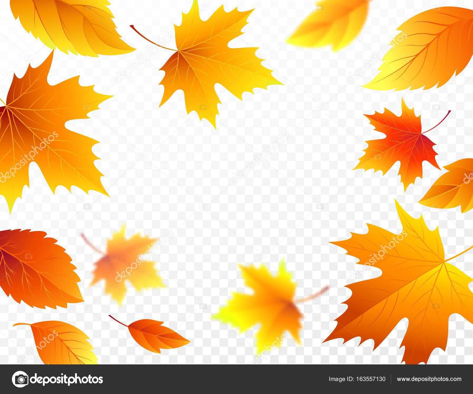 Wallpaper Leaves Falling Folhas De Outono Caindo Em Fundo Transparente Quadriculado