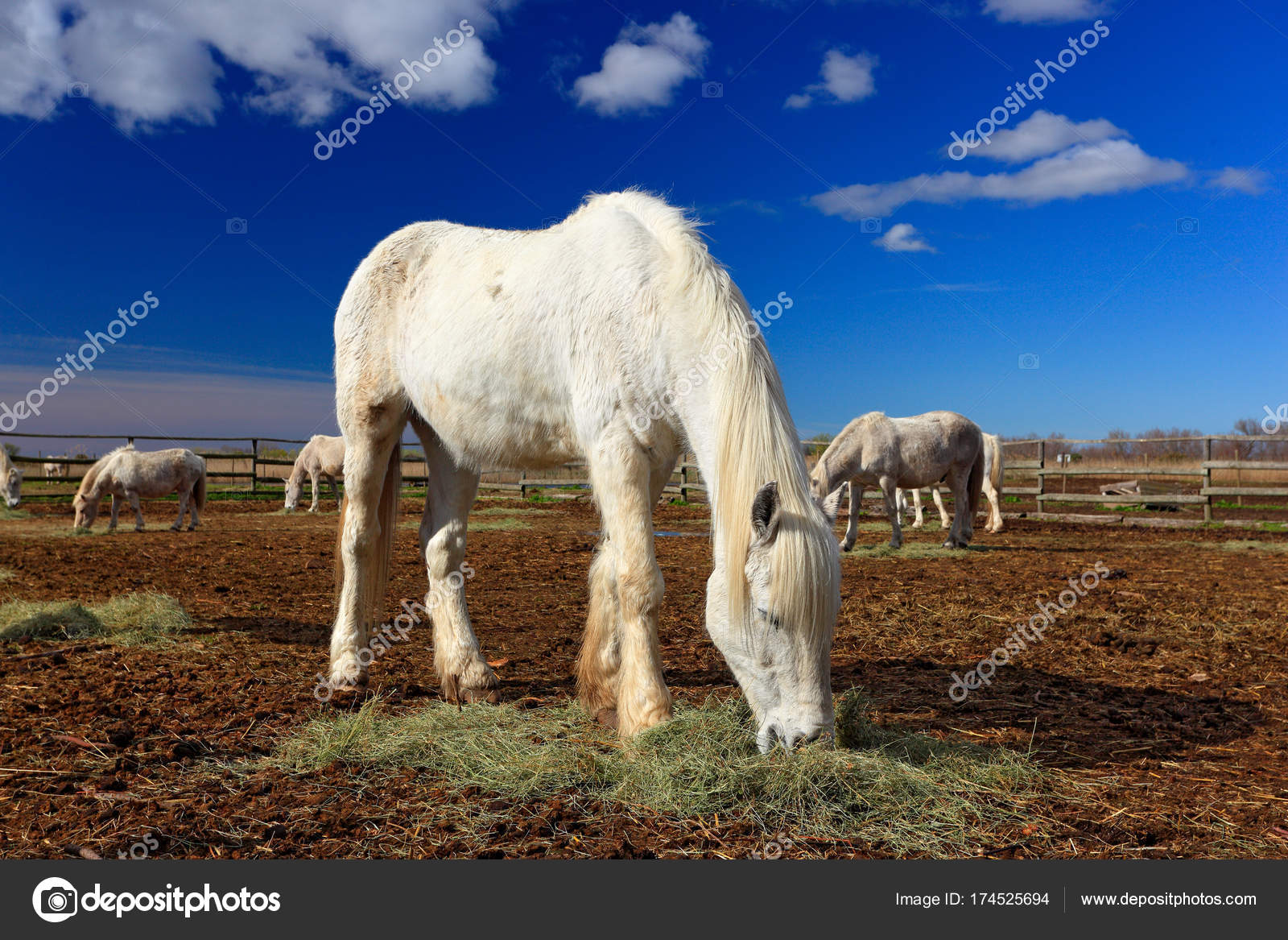 Feed Hay Horse Feed On Hay Stock Photo Ondrejprosicky 174525694