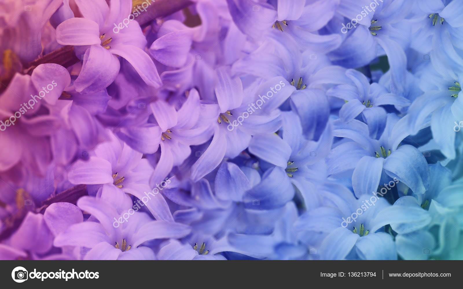 Iridescent Wallpaper Iridescent Flowers Lilac Floral Background Floral Wallpaper For