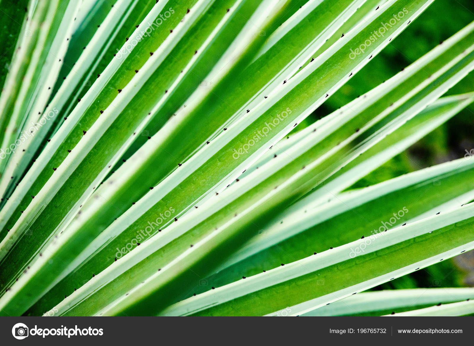 Aloe Vera Kaktus Cactus Aloe Vera Closeup Natural Natural Background The Concept