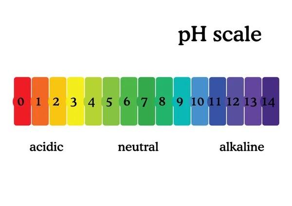 The pH scale Universal Indicator pH Color Chart diagram \u2014 Stock - ph chart