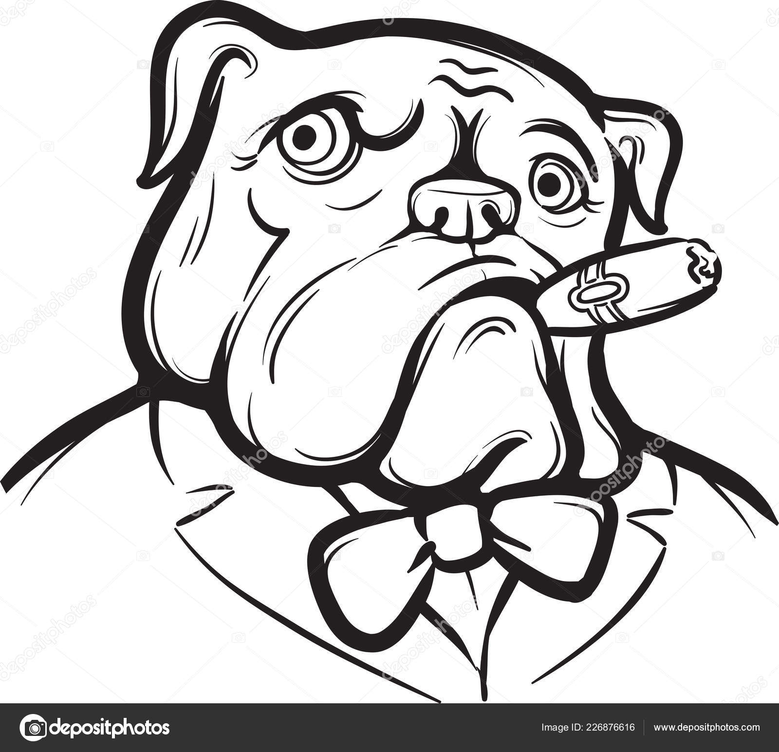 Are Old English Whiteboard Drawing Old English Bulldog Cigar Stock Vector
