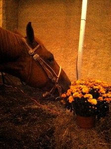 Louie eating flowers
