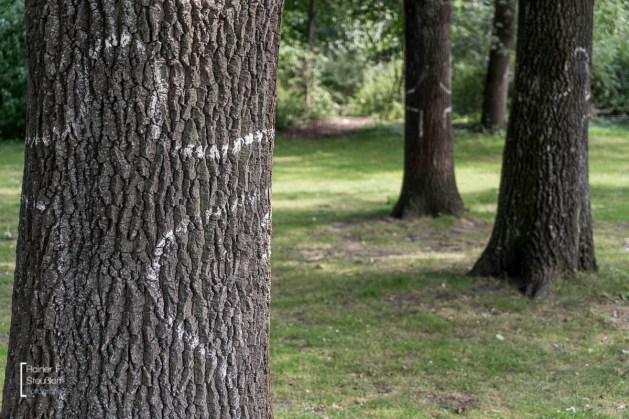 Bäume umarmen