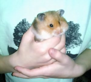 Off the Mat: Ode to a Hamster