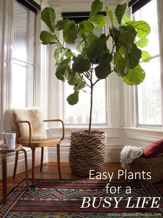 easy-plants-busy-lifestyle