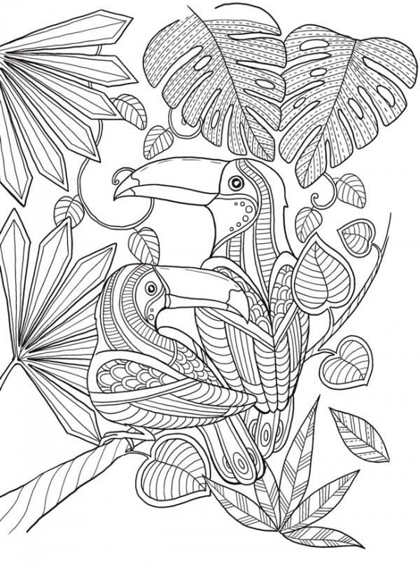 Freebie: Toucan Coloring Page