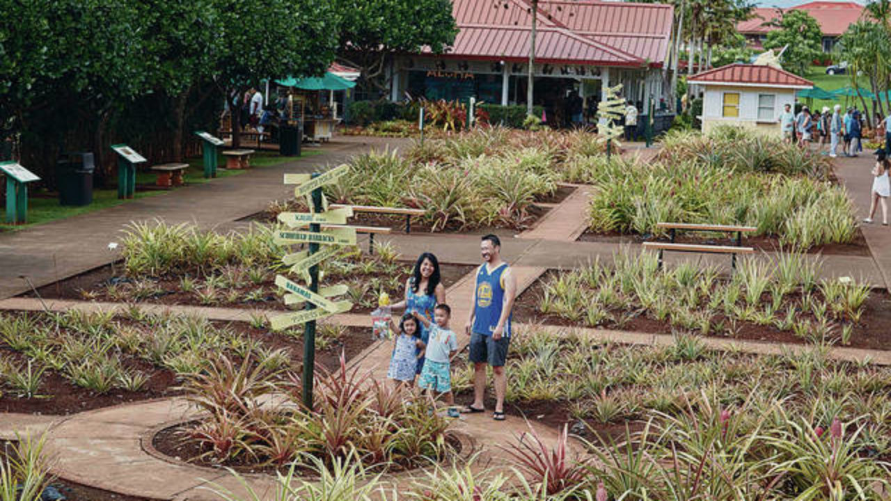 3 Attractions Go Beyond Pineapples At Dole Plantation Honolulu Star Advertiser