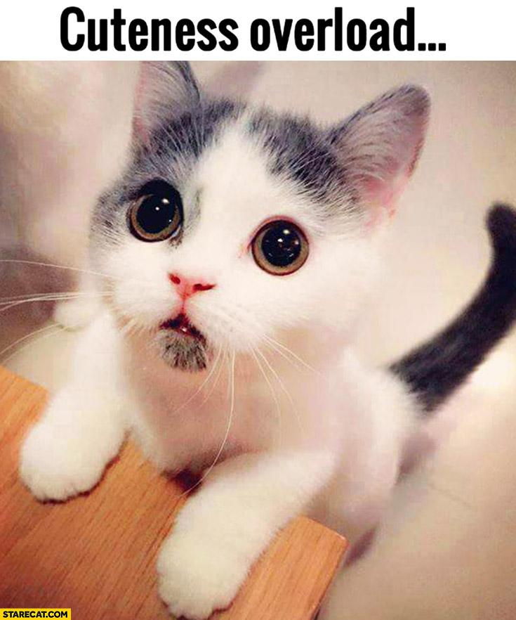 Star Wars Animated Wallpaper Cuteness Overload Cute Kitty Starecat Com