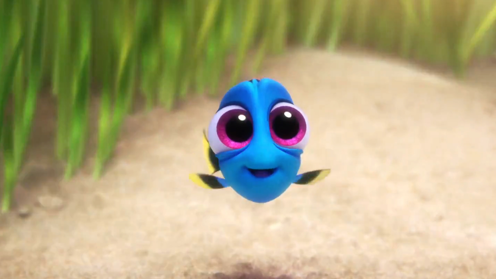Fall Desktop Wallpaper With Crush Quotes Finding Dory Finding Dory Movie Clip Baby Dory Fandango