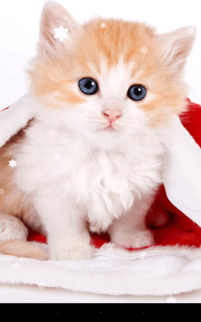 Christmas Cat Live Wallpaper App Ranking and Store Data   App Annie