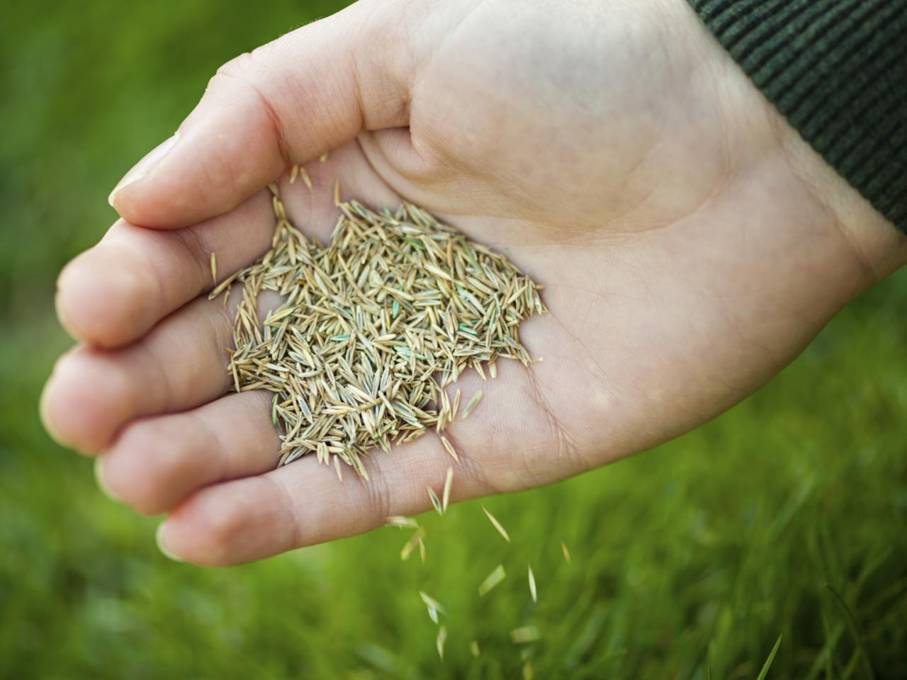 Magnificent Most Types St Augustine Grass Seed Sale St Augustine Grass Seed Walmart Grass Seed houzz-02 St Augustine Grass Seed