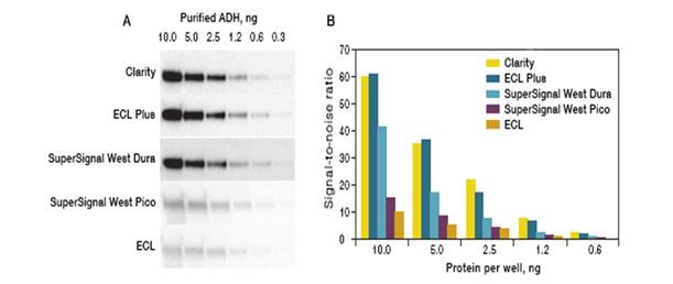 Western blot optimization enhance detection  quantification of low