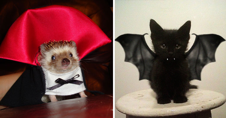 Ferret Wallpaper Iphone 151 Terrifyingly Cute Halloween Costumes For Pets Bored