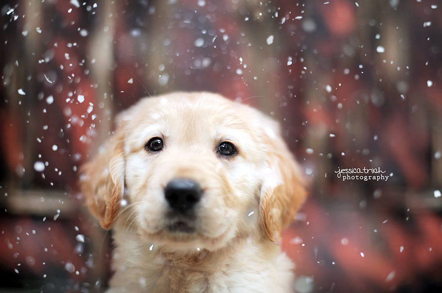 Cute Puppy Wallpapers For Iphone Let It Rain Love 19 Year Old Photographer Takes Beautiful