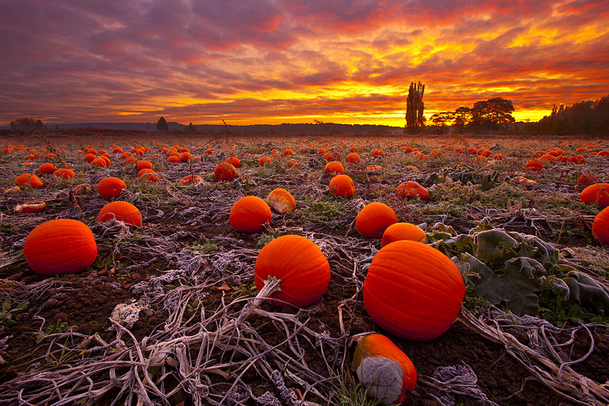 Fall Scenes Wallpaper With Pumpkins These 20 Beautiful Autumn Photos Will Inspire You To Grab