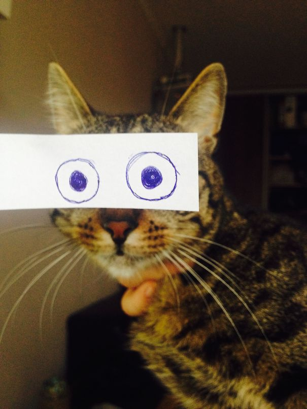 Panda Halle Cat Owners In Japan Are Giving Their Cats Funny Anime Eyes