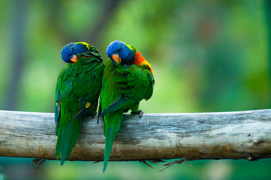 Cute Cartoon Animal Wallpaper Share Your Best Photos Of Loving Bird Couples Bored Panda