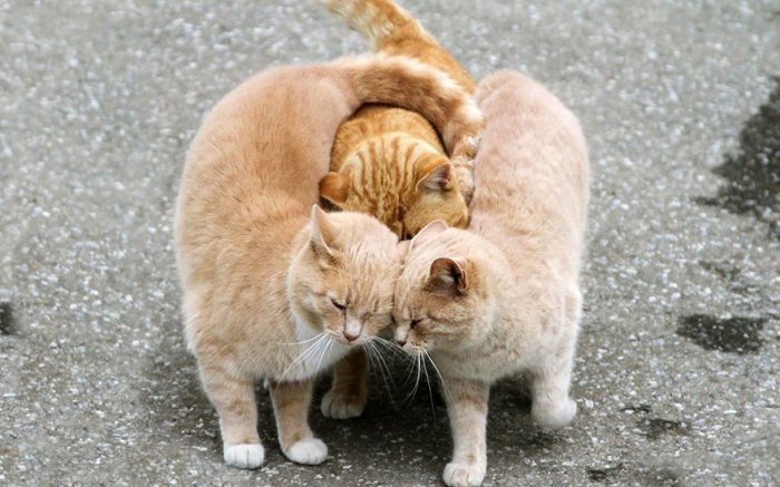 Kitty Miłość