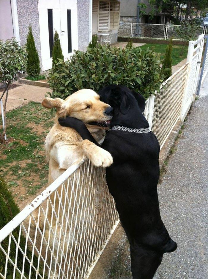 Przytulać
