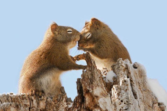 Śliczne Wiewiórki Whispering czułe słówka