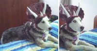 Turn Your Dog Into A Dinosaur With This Triceratops