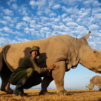 Guarding The Last Male White Rhino in the Wild