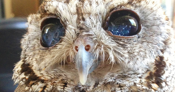 Cute Cat With Good Morning Wallpaper Meet Zeus The Rescued Blind Owl With Stars In His Eyes