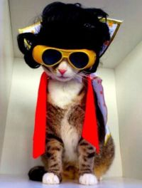23 Cats In Halloween Costumes That Wish This Holiday Never ...