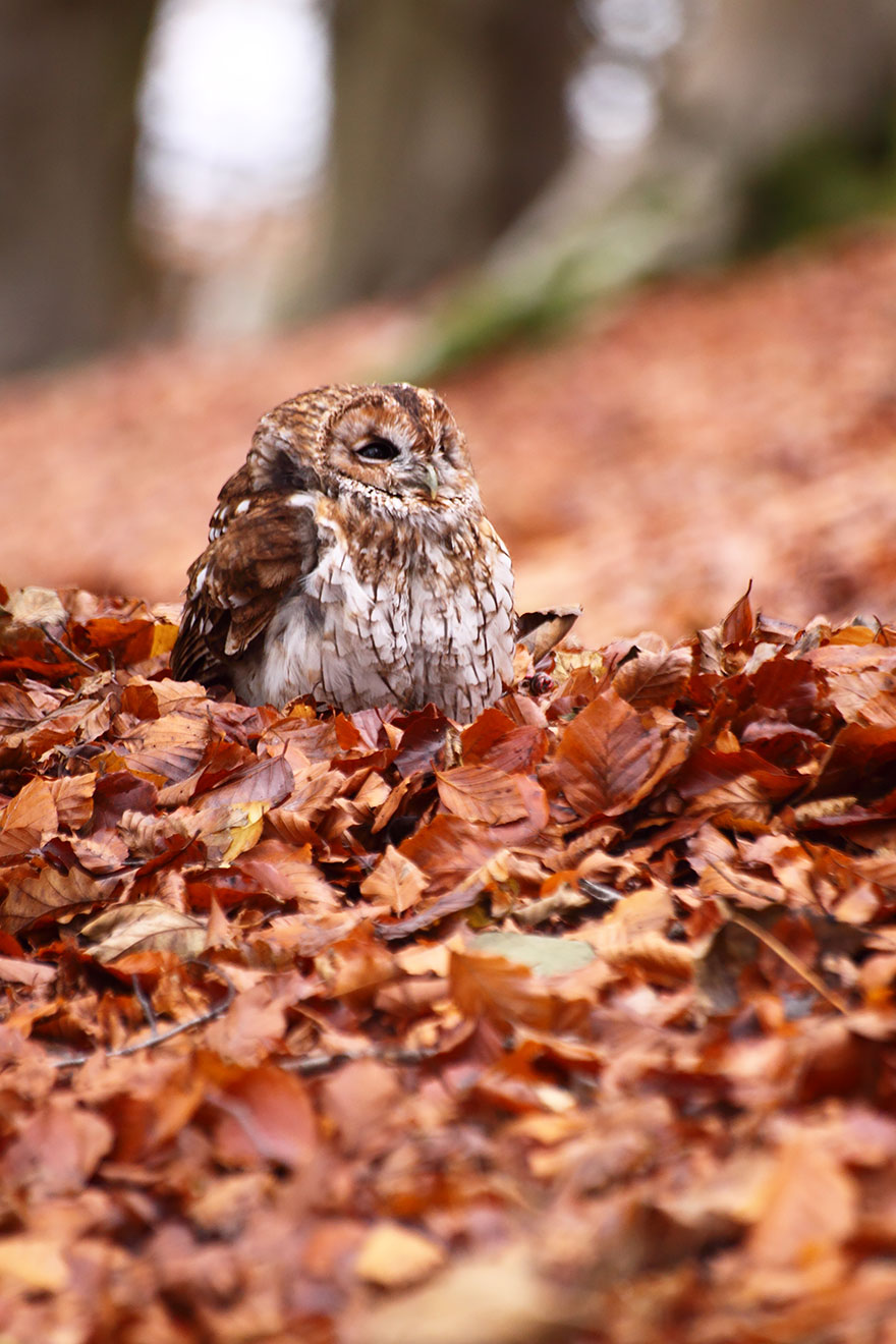 Cute Owl Wallpaper For Mac Autumn Animals Bored Panda