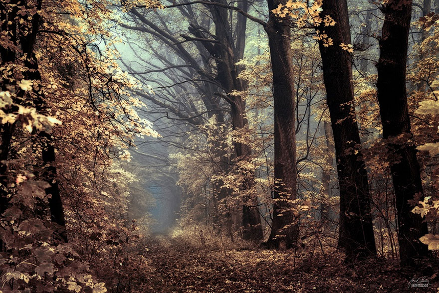 Fall Trees Iphone Wallpaper Dream Like Autumn Forests By Czech Photographer Janek