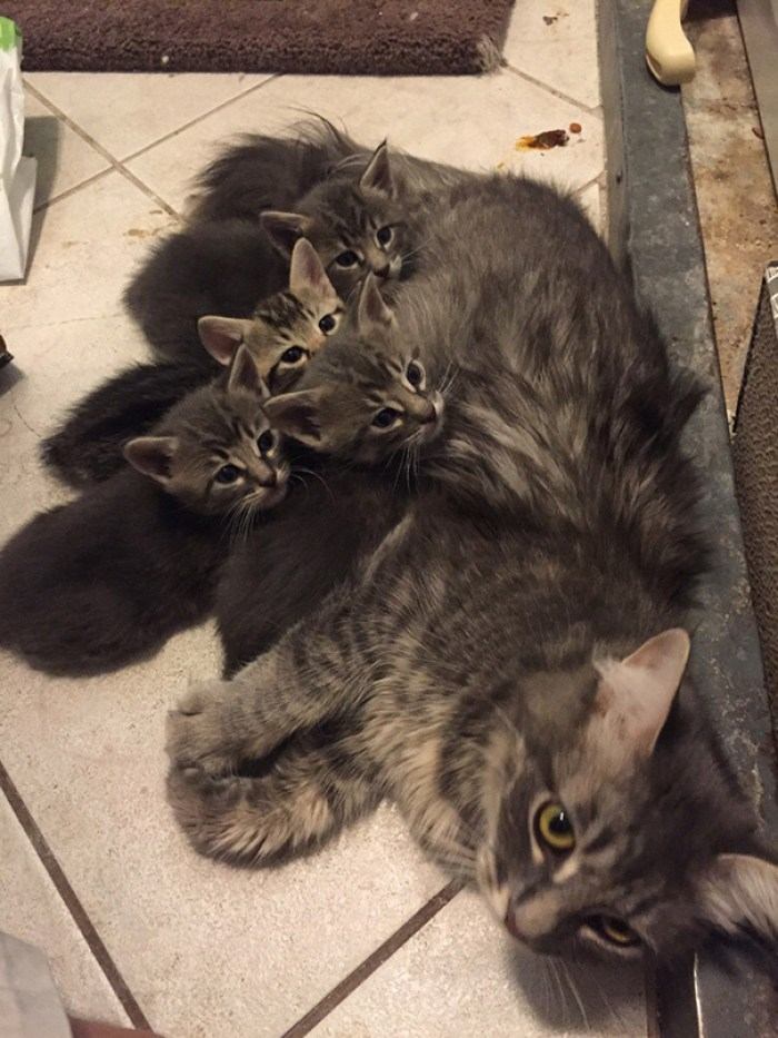 My Cat Recently Had All Girl Kittens, They Seem To Be More Alike Than I Thought