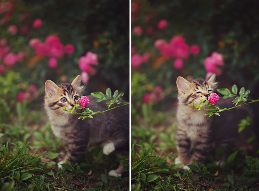 Animals Sniffing Flowers Is The Cutest Thing Ever (15+ Pics