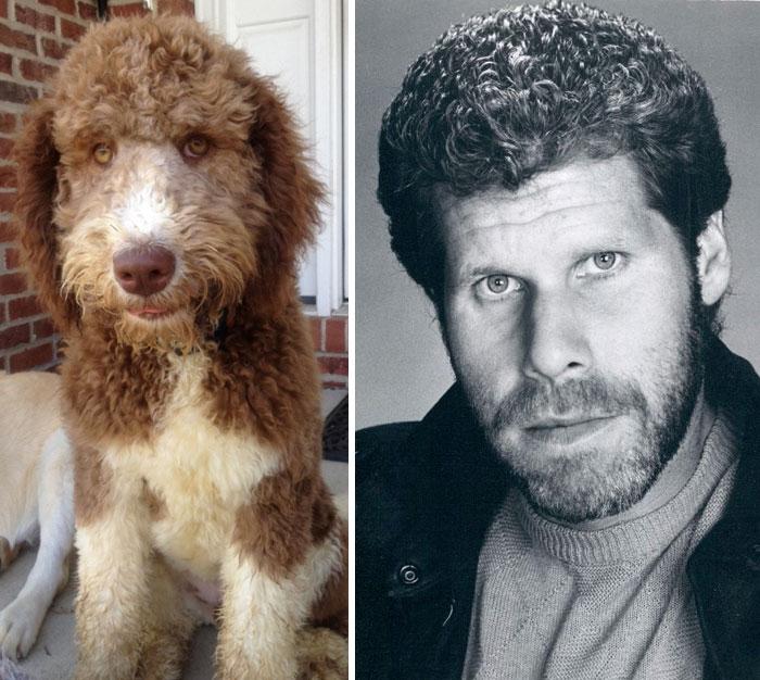 Ten pies wygląda jak Ron Perlman