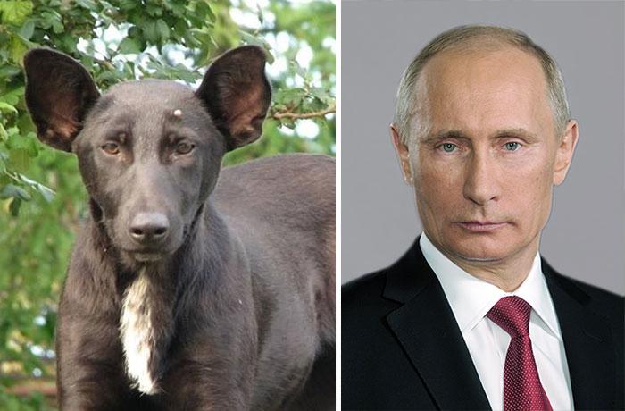 Pies Wygląda Putina