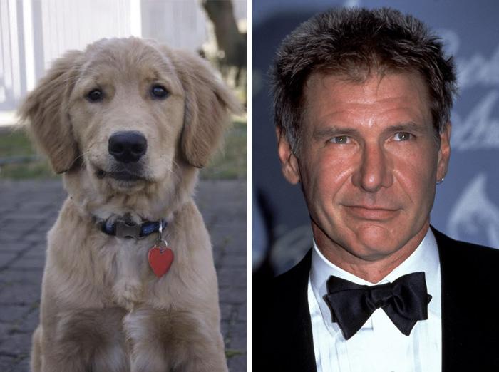 Ten pies wygląda jak Harrison Ford