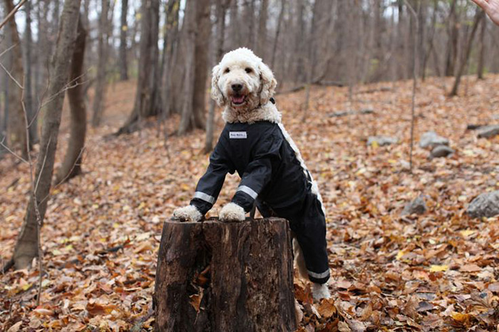 Riddle Finally Solved Dogs Should Wear Pants Like This