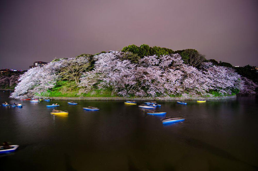 Best Wallpaper App For Iphone 17 Magical Pics Of Japan S Cherry Blossom By National