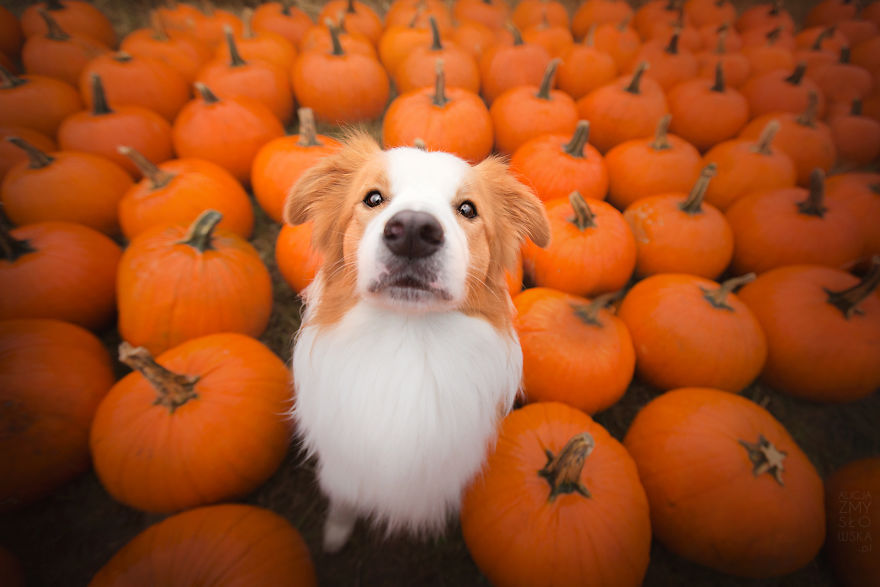 Fall Pumpkin Patch Wallpaper My Dogs And I Found A Place Full Of Pumpkins And Decided