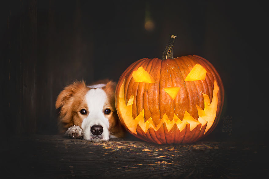 Spooky Fall Wallpaper My Dogs And I Found A Place Full Of Pumpkins And Decided