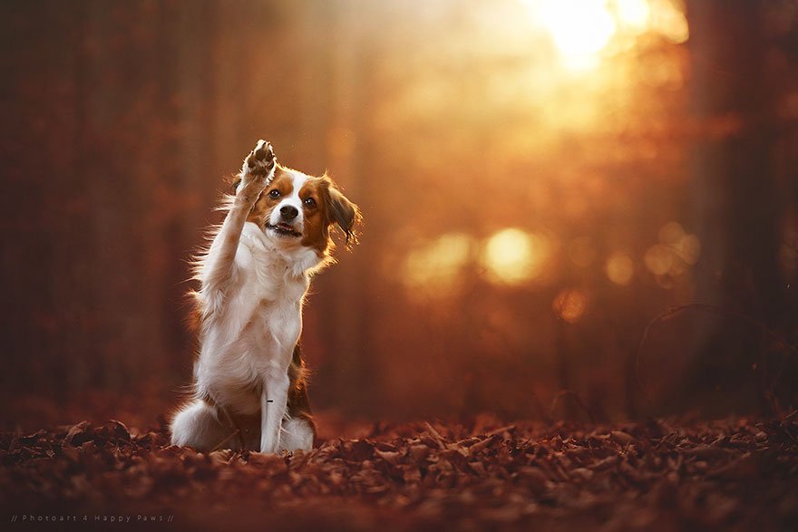 Puppies In Fall Wallpaper Photographer Captures Soulful Portraits Of Dogs Enjoying