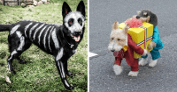 20+ Terrifyingly Pawsome Halloween Costumes For Dogs